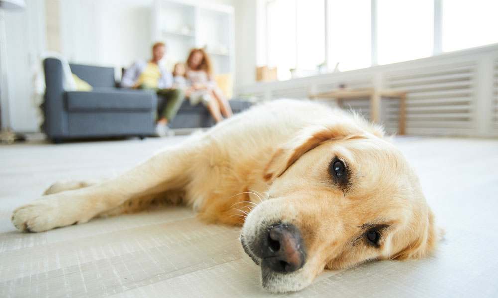 Pets & Flooring – What Should You Choose