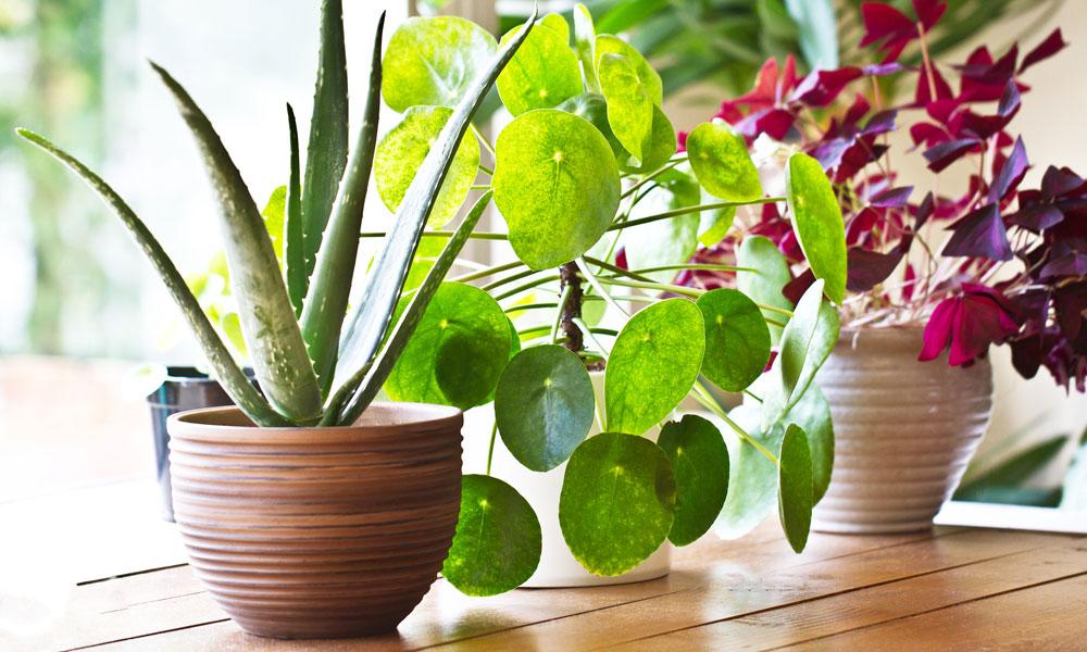 Flooring advice when you keep Indoor Plants