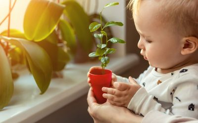 How to Breathe New Life into Your Home for Spring